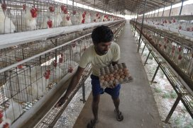 PoultryWorld - Indian poultry producers cash in