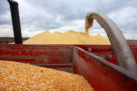 PoultryWorl Expensive corn leads to losses in Ukrainian poultry industrys