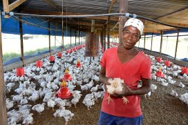 PoultryWorld - Botswana's growing demand for chicken